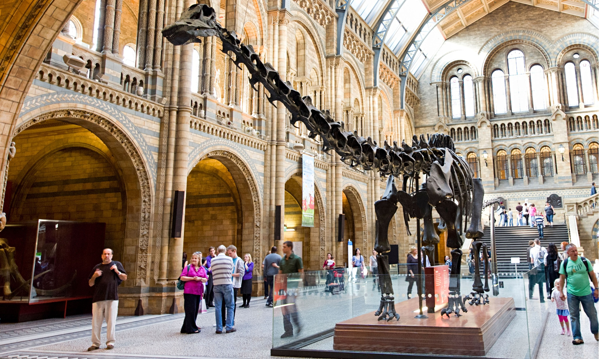 Dippy the dinosaur in the Natural History Museum's entrance hall.